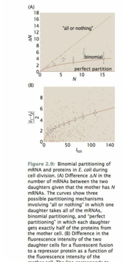 Physics 3511: Biological Physics
